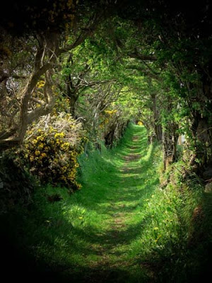 The ancient road that leads to an ancient stone circle.
